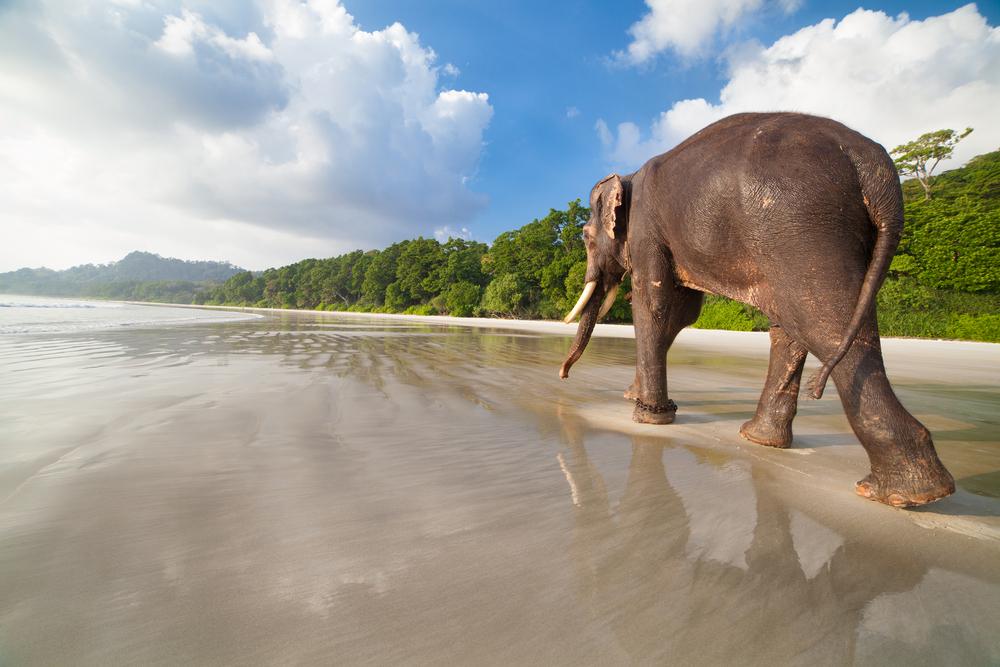 elephant-in-india-travel