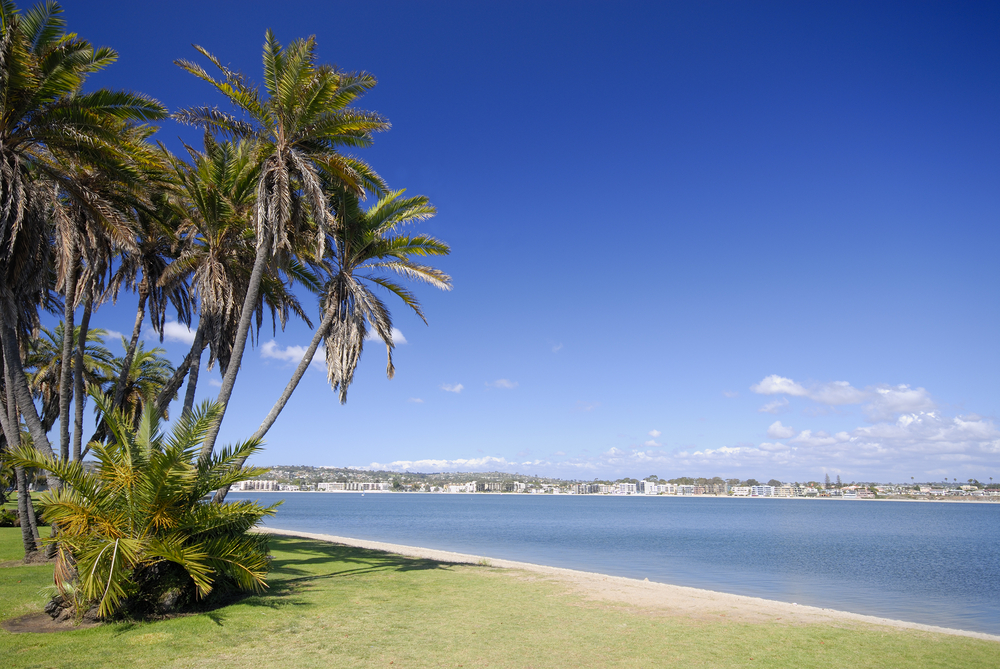 Palms on the beach of Mission Bay, San Diego, California