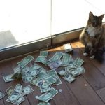 Cat brought money back to the office every day!