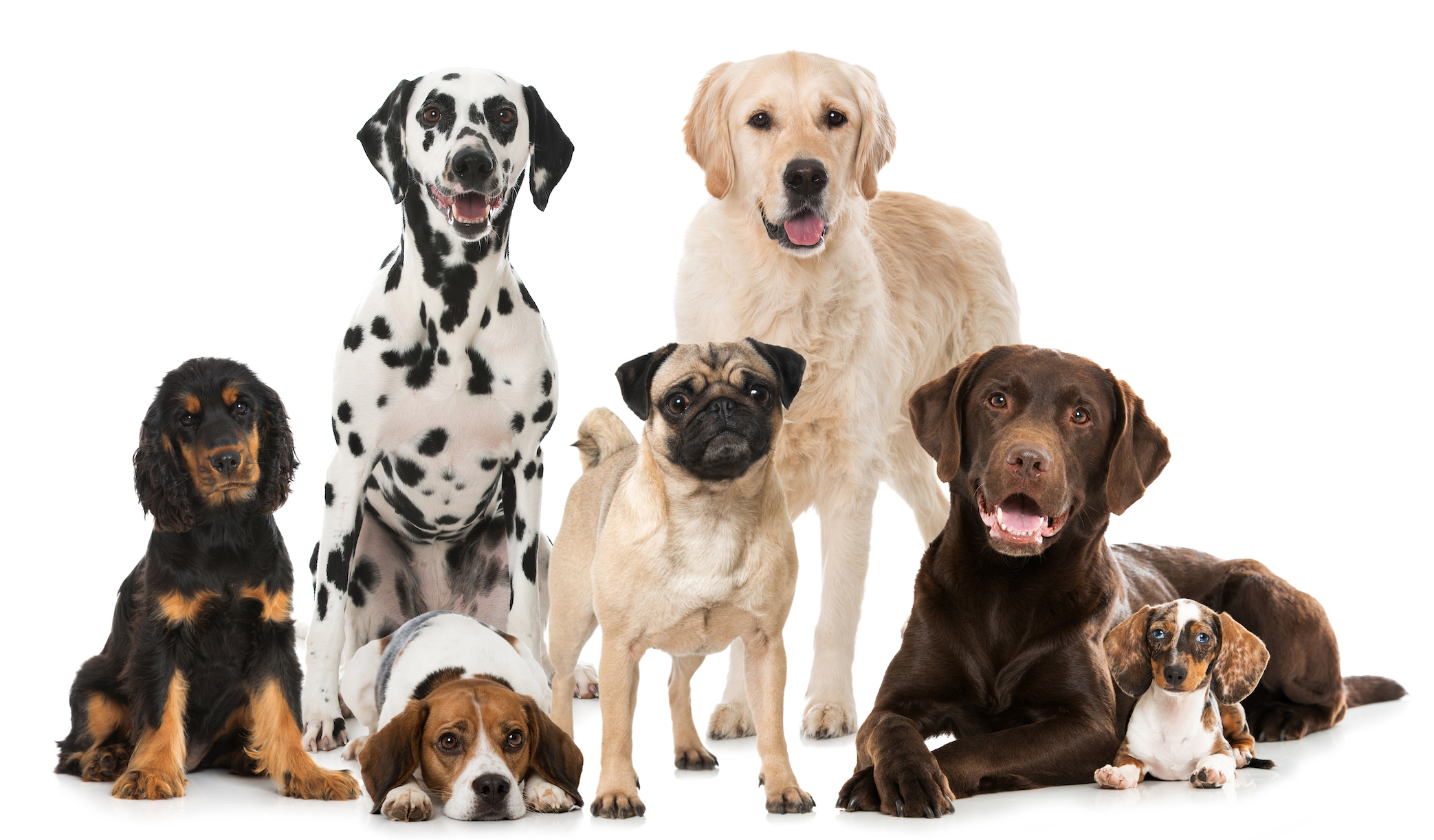 Can you name these dog breeds?